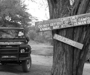 24-Day-Gorillas,-Game-Parks-and-Zanzibar-africanoverland201407090104091.JPG