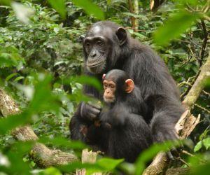 7-Day-Gorilla-Encounter-camping-africanoverland201407091248271.jpg