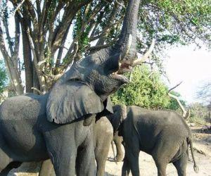 Chobe-National-Park-Camping-Safaris-africanoverland201407311122331jpeg