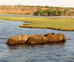 Chobe-National-Park-africanoverland201407251140191.JPG