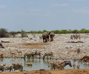 Etosha-National-Park-africanoverland201407250158271.JPG