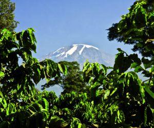 Machame-Route-201407311041061.jpg