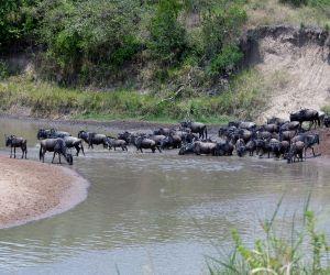 Masai-Mara-africanoverland201407250205171.JPG