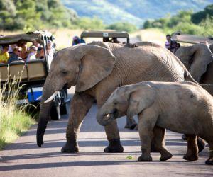 Pilanesberg-Safaris-201407311035411.jpg
